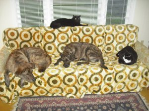 Greek Rescues L-R: Jickers Doophanopoulos, Snickers Snackers, DeeDee Ramone, Zoey Ramone (top)